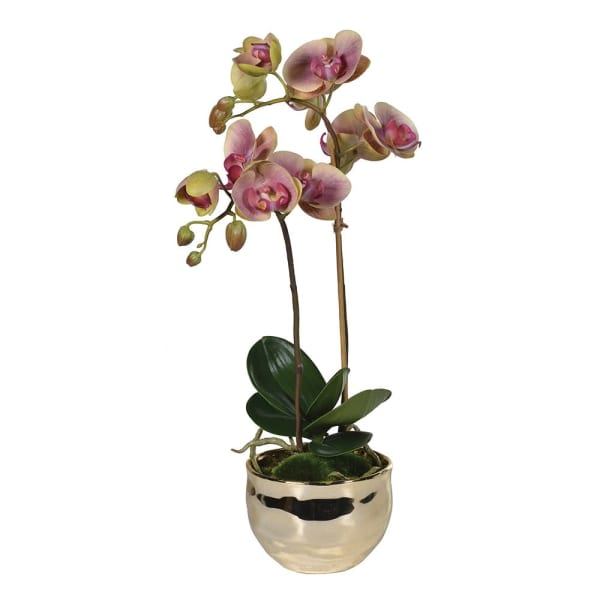 Dusky Pink & Green Orchid in Gold Pot