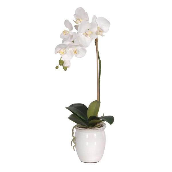 White Orchid in Cream Glazed Pot