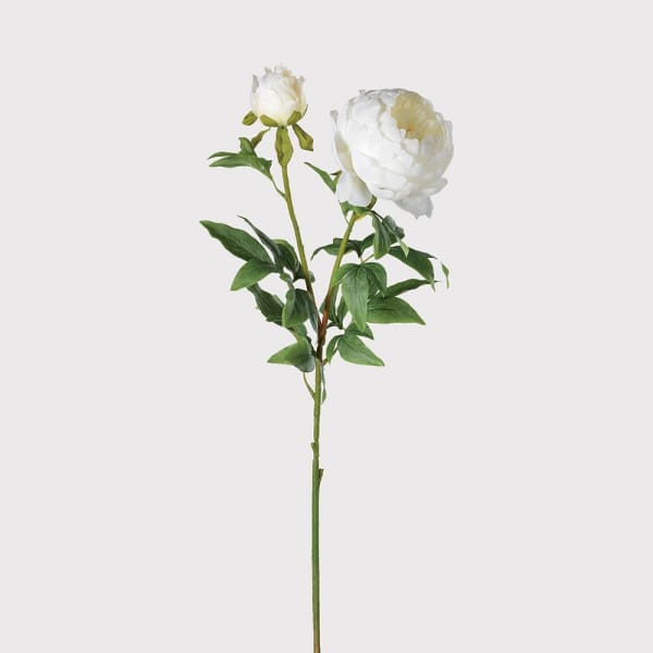 Large White Open Peony with Bud
