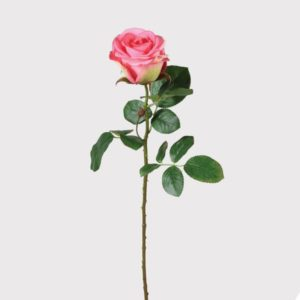 Pink Single Rose Stem