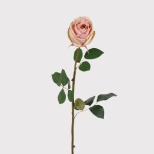 Soft Pink Rose Vienna