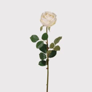 Vienna White Rose
