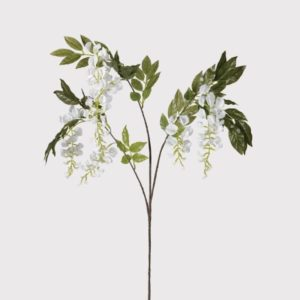 White Wisteria Branch with Leaves